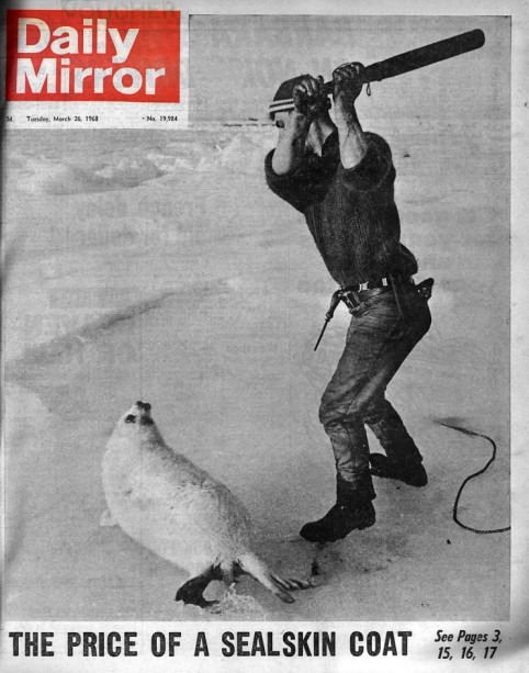 Daily Mirror Front Page March 1968 Kent Gavin Seal culling cull club canada 1968 elliot wagland greg bennett The Price of a Sealskin Coat