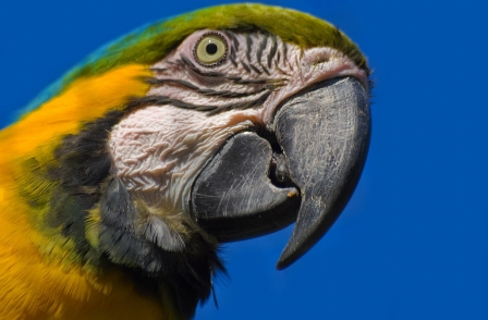 Hercule Parrot solves murder mystery by telling editor who killed his wife