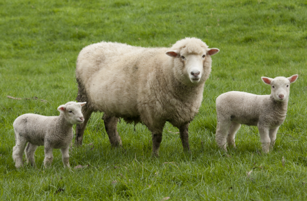 Distorted, sloppy reporting did not let facts get in the way of some BBC-bashing over Lambing Live