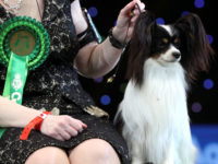 News diary 2-8 March: Post-Brexit trade talks begin and Crufts set to go ahead despite coronavirus